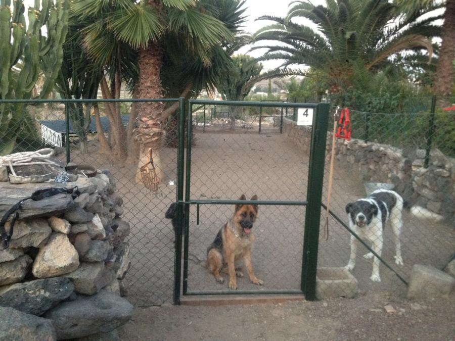 Fotos residencia para animales guarderia canina for Guarderia canina gran canaria
